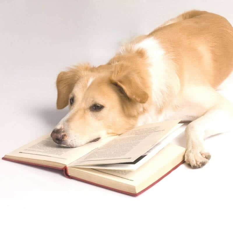 8 Heartwarming Books for Dog Lovers